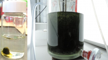 Photogranules in hydrostatic cultivation (left) and in reactors treating wastewater (right)